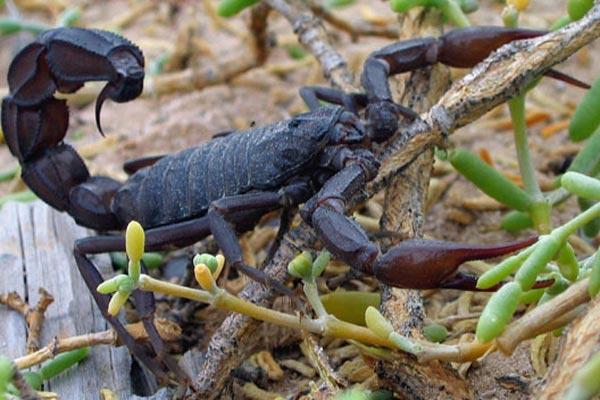 01_scorpion