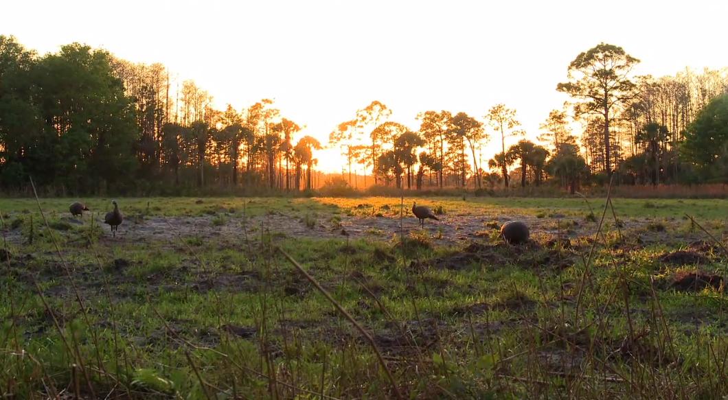 WS Turkey Field at sunset