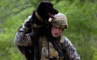 """Saving Private K-9"" Favors the Underdog"