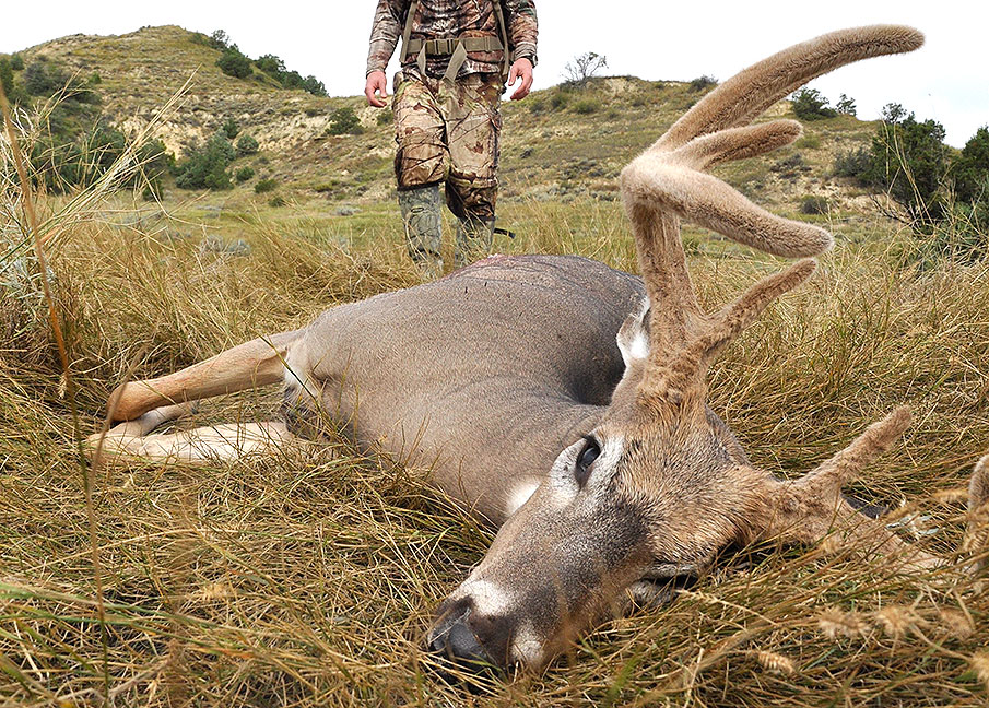 Out of State Whitetail Hunts