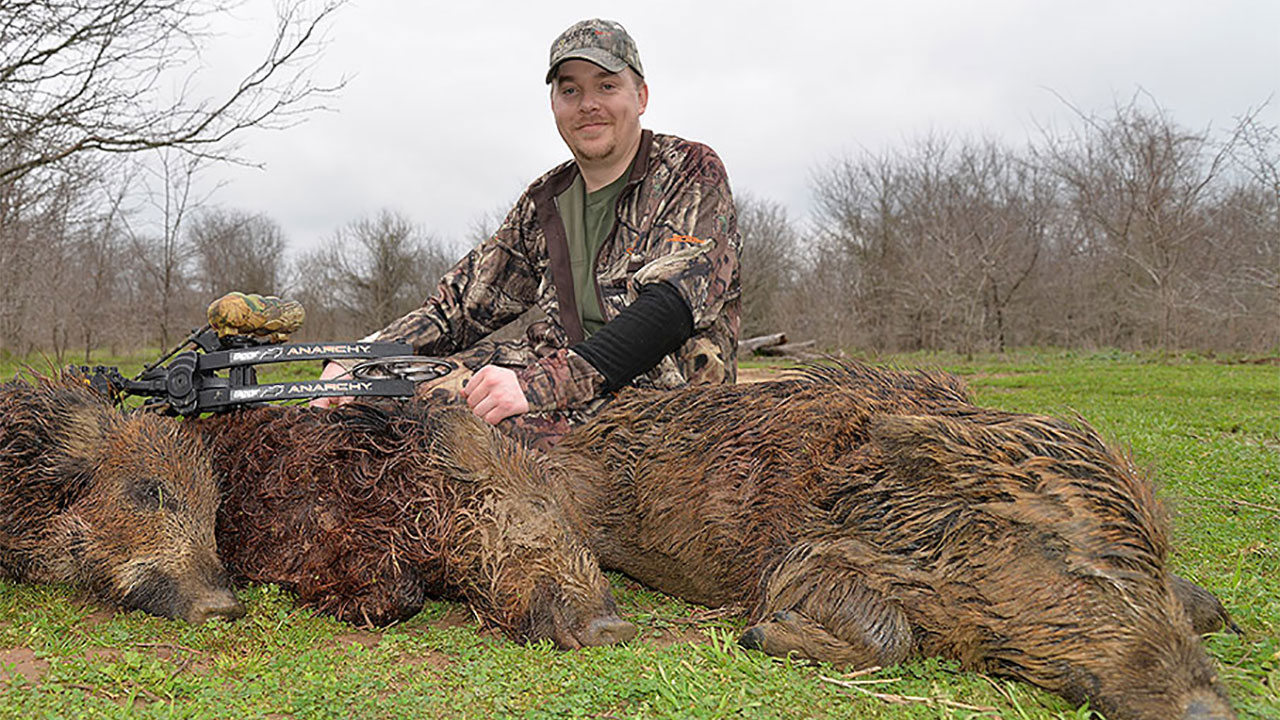 Tips for Planning Perfect Wild Hog Hunts