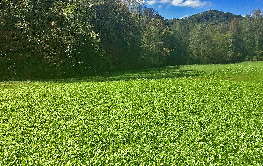 guide-to-spring-food-plots-for-deer-food-plot