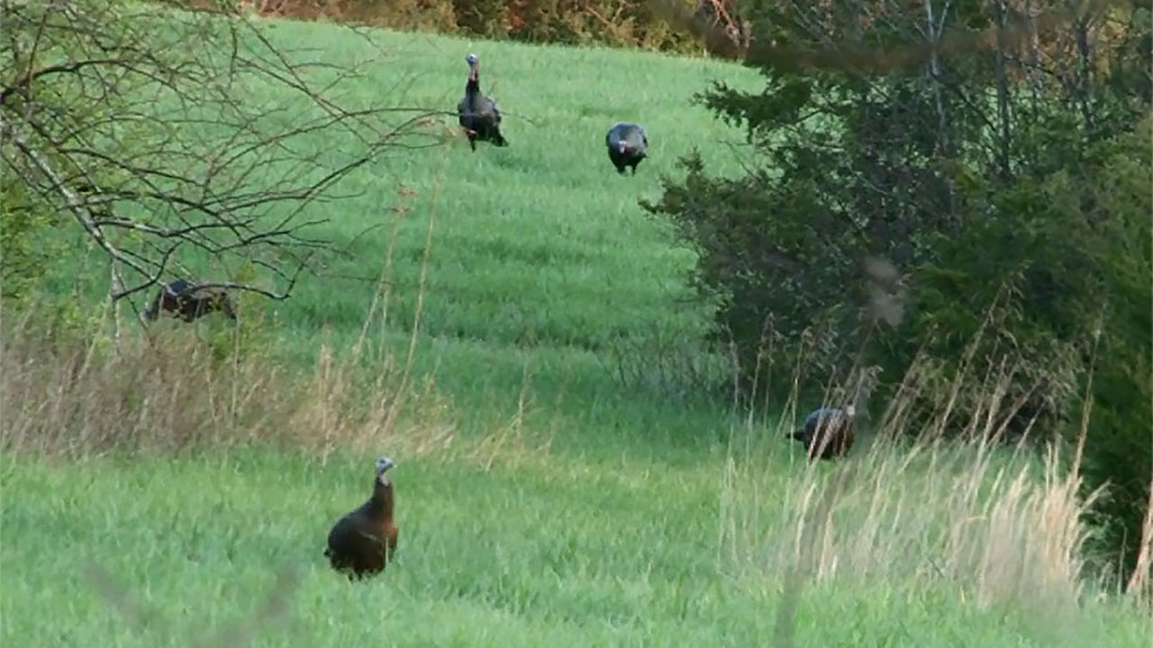 Spring Chronicles: Strategic Position is Critical for Early-Season Turkey Hunting Success