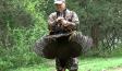 Late Season Mid-Day Turkey Hunting Tips
