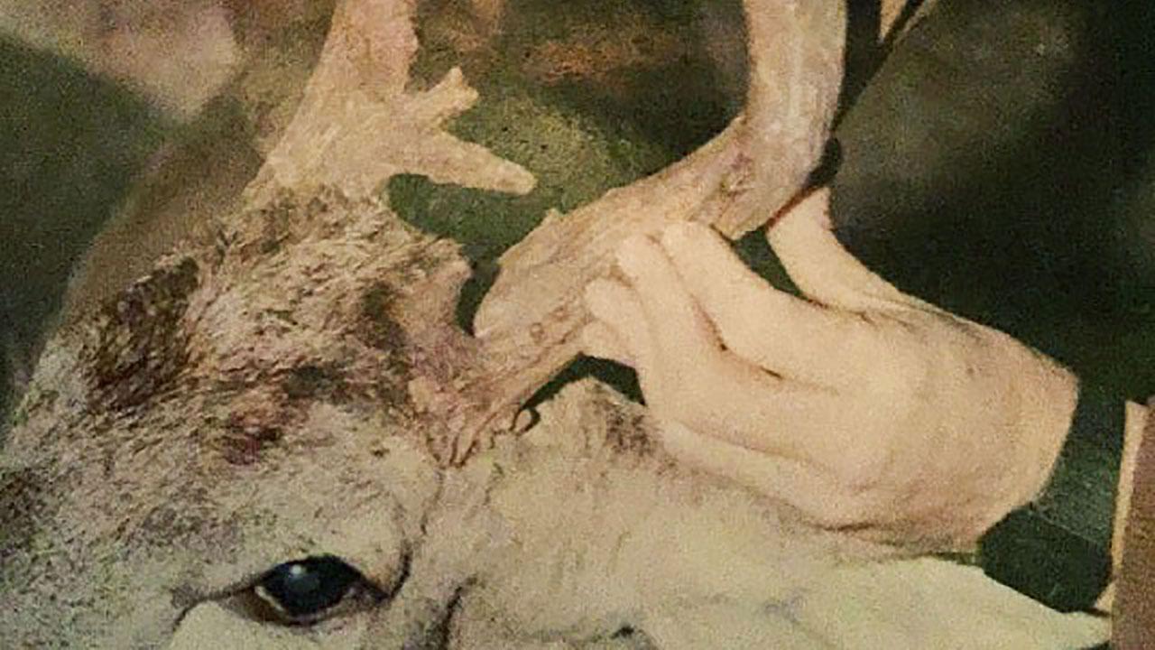 deer-poaching-cross-tine-buck-oklahoma-SC