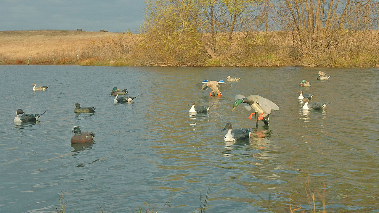 duck-decoy-spread-small-pond