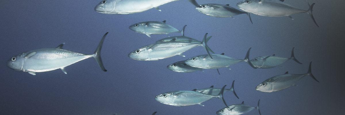 Al McGlashan's Fish'n With Mates