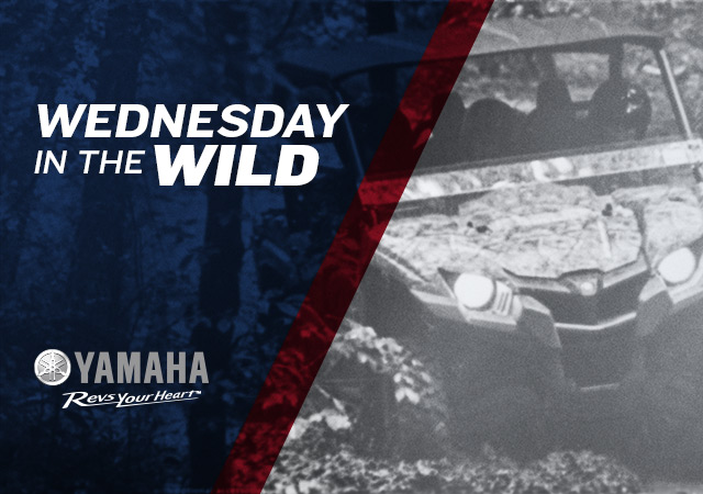 Wednesday in the Wild Yamaha