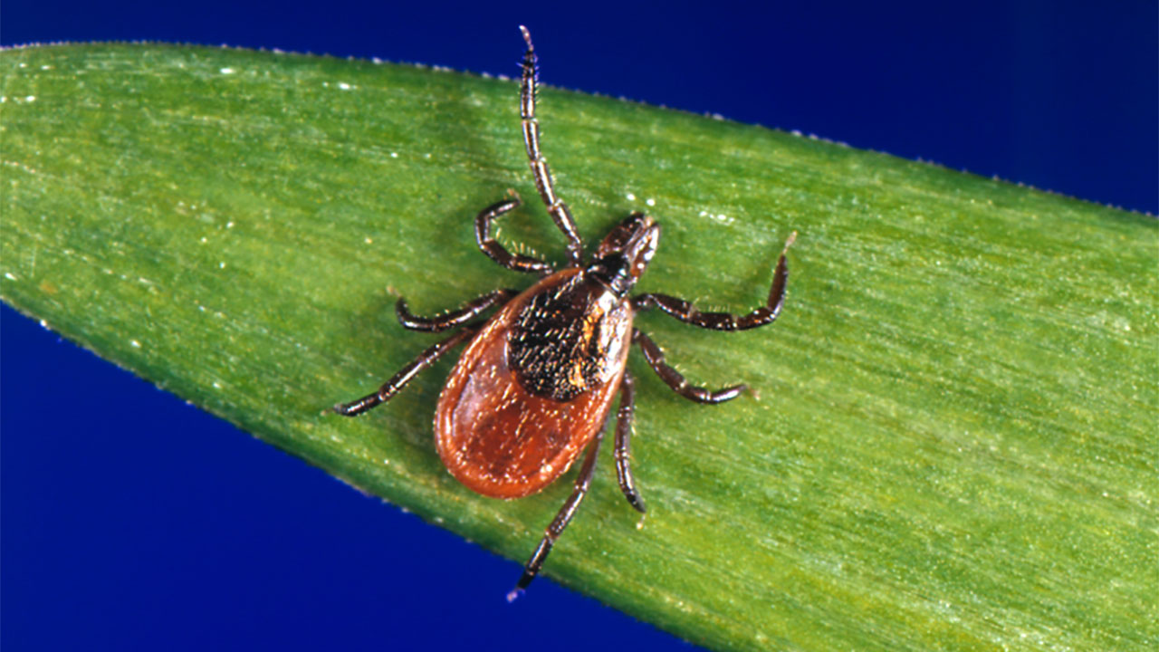 tick-diseases-repel-removal-tips-L