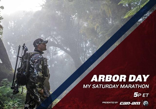 My Saturday Marathon Arbor Day