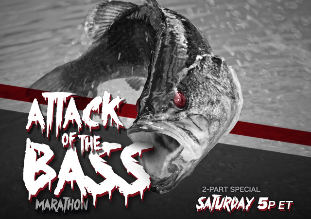Attack of the Bass