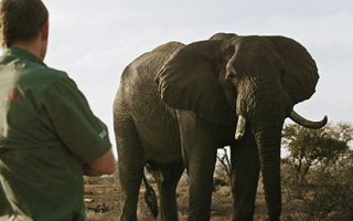Carter's W.A.R. (Wild Animal Response)