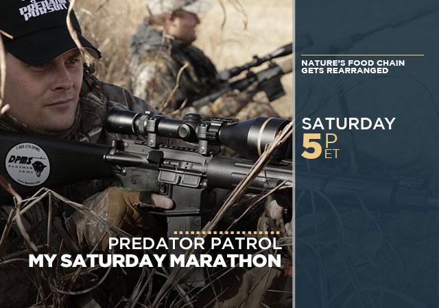 My Saturday Marathon Predator Patrol