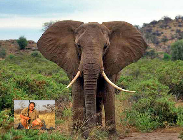 //www.rifleshootermag.com/files/ph-rifle-suggestions-for-10-popular-african-hunts/03_elephant_050112.jpg