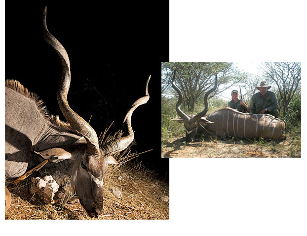 //www.rifleshootermag.com/files/ph-rifle-suggestions-for-10-popular-african-hunts/08_kudu_050112.jpg