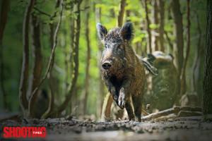 Hornady_Full_Boar_Ammo_Review_F