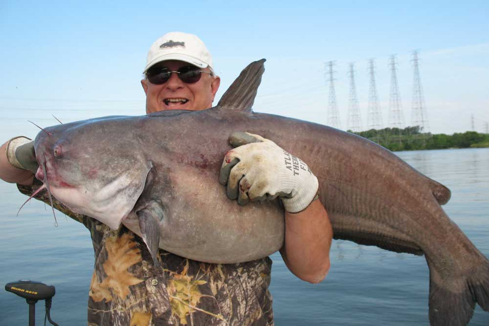 //www.gameandfishmag.com/files/10-biggest-catfish-world-records-of-all-time/blue-cat-1.jpg
