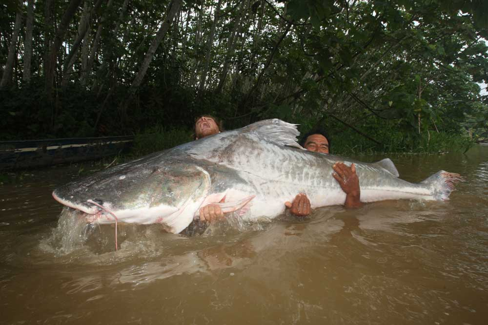 //www.gameandfishmag.com/files/10-biggest-catfish-world-records-of-all-time/lau-lau_1.jpg