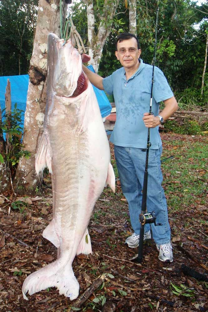 //www.gameandfishmag.com/files/10-biggest-catfish-world-records-of-all-time/lau-lau_world-record.jpg