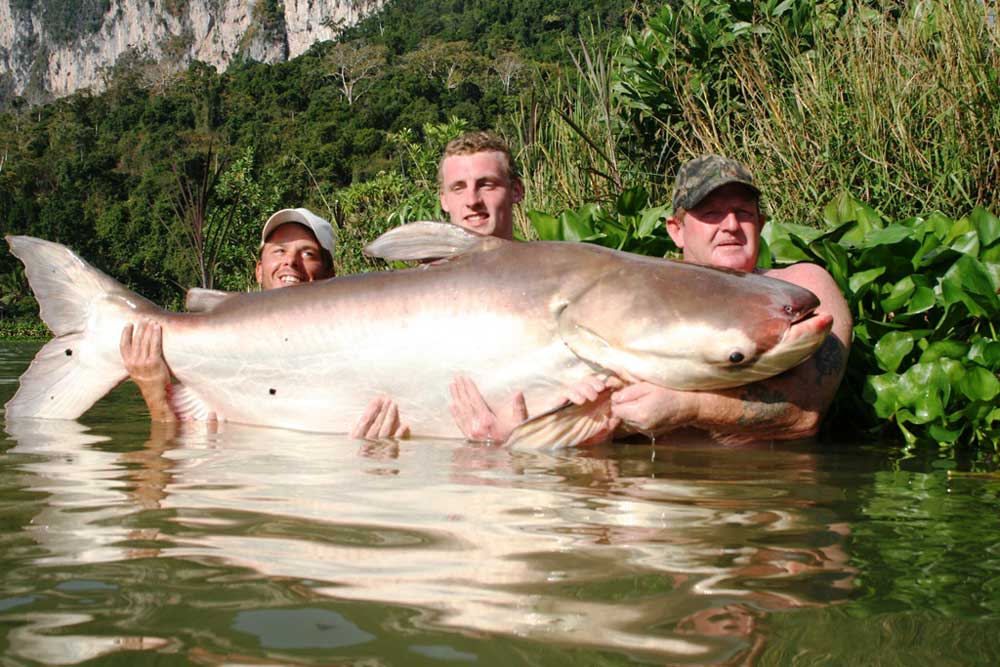 //www.gameandfishmag.com/files/10-biggest-catfish-world-records-of-all-time/mekong_1.jpg