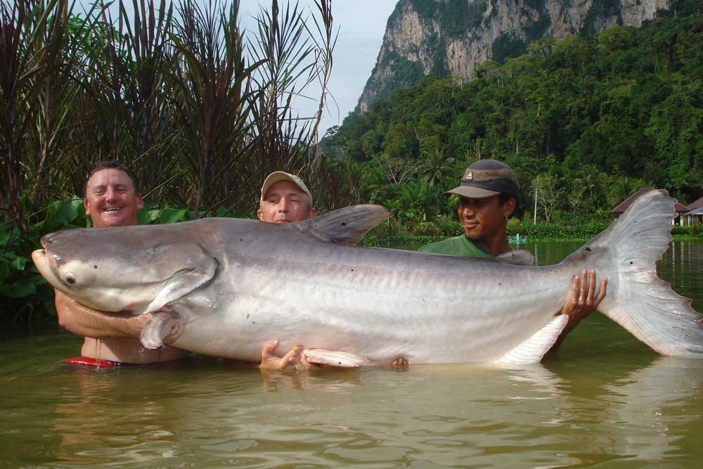 //www.gameandfishmag.com/files/10-biggest-catfish-world-records-of-all-time/mekong_world-record.jpg