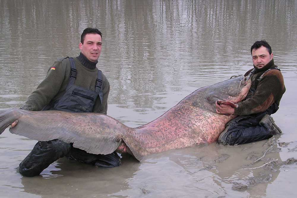//www.gameandfishmag.com/files/10-biggest-catfish-world-records-of-all-time/wels_world-record.jpg