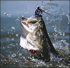 Deep Secrets of Oklahoma Bass