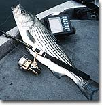 From the Ohio River to Herrington Lake, plus two other top picks, here is where you'll find our state's best hybrid and striper fishing right now!