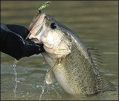 Top Winter Bass Lakes in South Carolina