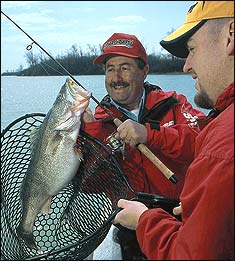 Willow Island, Racine and Pike Island tailraces offer excellent year-round angling on the Ohio River for hybrid stripers, walleyes, catfish and more. Here's where you should try this year!
