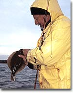 Barnegat Bay Winter Flounder