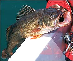 Illinois' Best Bets for Fishing