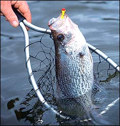Peach State Crappie Forecast