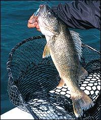 Minnesota's Spring Walleye Fishing