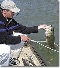 Best Bets for Bass