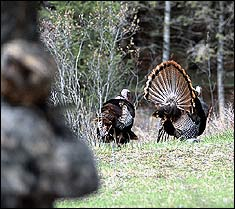 Our Spring Turkey Outlook