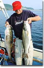 The Clinch and Cumberland river systems have perhaps the best freshwater trophy-striper fisheries in the world. A world record could come from these waters any time.