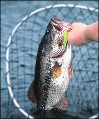 Diamond Valley Bass