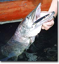 West Virginia's Catch-and-Release Muskies