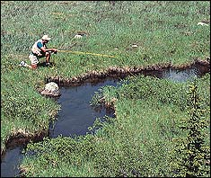 Creekin' for Trout in Siskiyou