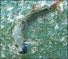 Michigan 39 s best bets for muskies for Sc fishing license age