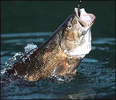 Michigan's Trout-Country Smallmouths