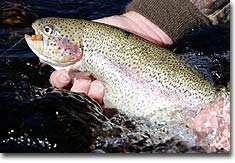 Top North Country Trout Rivers