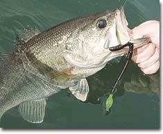 6 Fall Fishing Hotspots in Indiana