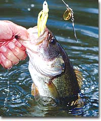 The Tennessee Wildlife Resources Agency manages several small lakes across the state for fishing and recreation. The bass fishing potential of these places may surprise you.