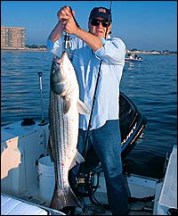Fall Striper & Blue Bonanza in New Jersey