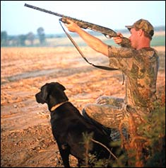 Tennessee's Best Public-Land Dove Hunting