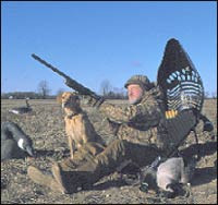 With A Canada Goose And Drake Mallard Already In The Bag, Delafieldu0027s Jerry  Solsrud And Red The Lab Hunt A Picked Cornfield. Photo By Dan Small. U201c