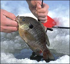 Our Top 10 December Ice-Fishing Hotspots