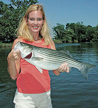 Stripers the hard way for Lake cumberland striper fishing report